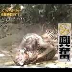 超危険なムツゴロウさんの衝撃映像集