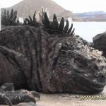 独自の進化を続けるガラパゴス諸島の生態が面白い