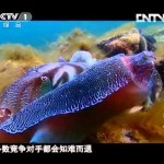 謎に満ちた深海生物の神秘