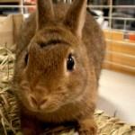 ポリポリといい音を出してエサを食べるウサギに癒される~