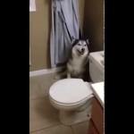 【海外】入浴が嫌で泣きながら逃げ回る犬が可愛すぎる