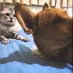 【海外】可愛らしい寝顔でスヤスヤ眠る犬、それを見つめる猫・・そして悲劇が!
