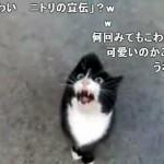 何かを訴えながらしゃべるネコ「我々は怪しい猫ではありません」