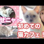 猫好き必見! 初めての猫カフェ体験動画で癒されよう!
